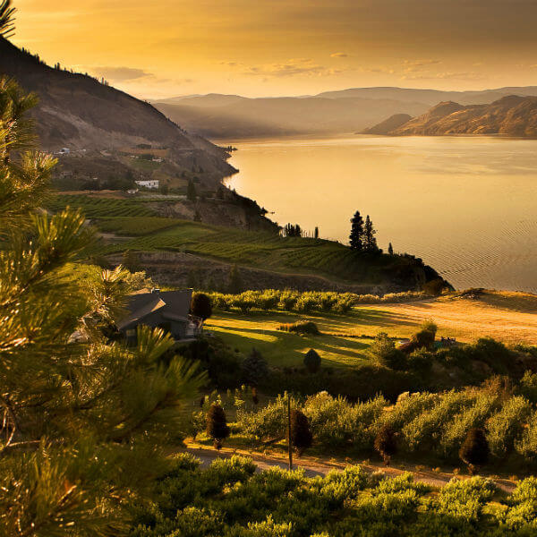 Sun setting over Summerland, BC with Okanagan Lake in the background and orchards in the foreground
